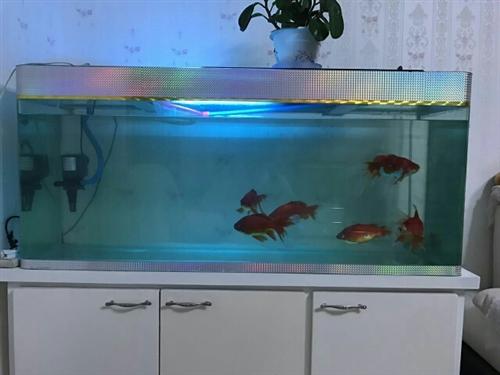 不想养啦!本人1.2的鱼缸求带走(渔具俱...