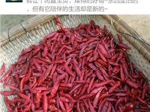 5元一斤朝天辣椒速卖