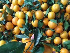 麻阳冰糖橙十斤装34.9
