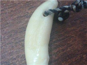 本人有来自蒙古国的几颗狼牙出售,狼牙霸气辟邪,有喜欢的联系18054110518