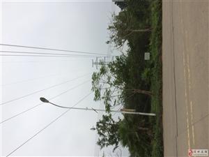 木棠镇的路灯还有镇上到木棠十字路口的路灯只是路灯杆而已,从来没有亮过
