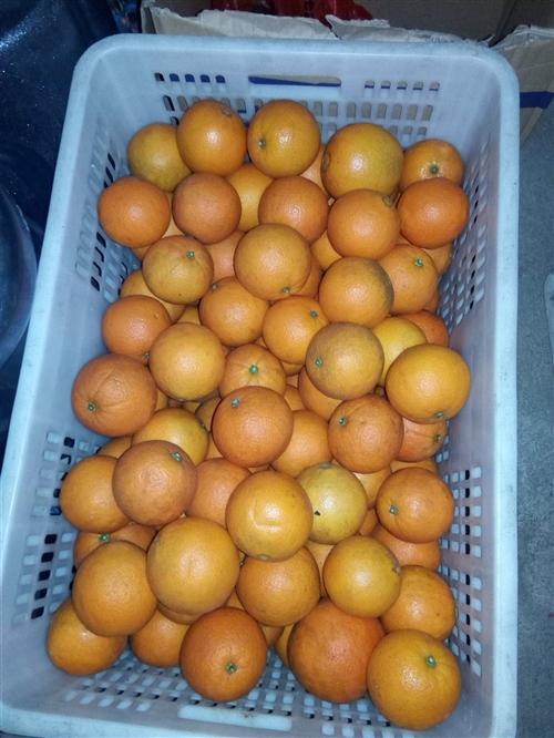 本人有血橙70-80的果有130斤,65的果有200斤,量大从优。