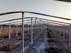 青州低价处理二手大棚水泥檩条立柱竹竿