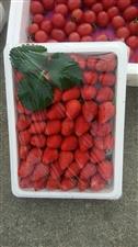 新�r大草莓�Yu