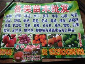 果树苗占地苗大量批发