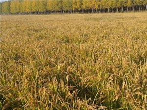 水稻田出租