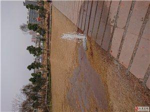 湿地公园管子破了趵突泉