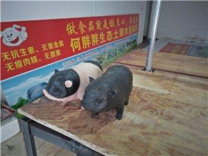 春节土猪肉直销特供