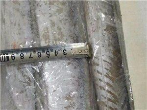 大量销售连云港野生带鱼