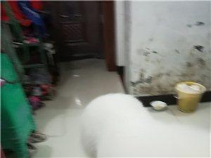 我们检到一条狗狗