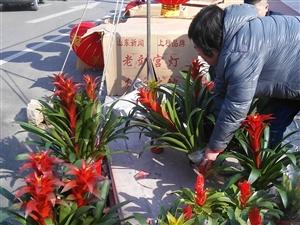 龙8国际娱乐中心集市上的花真漂亮!