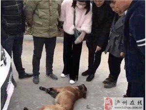 现在这年头,连狗都学会碰瓷了!