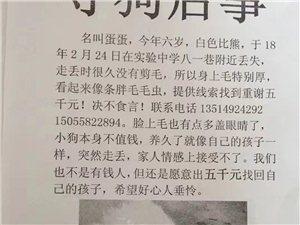 寻狗启事酬谢五千元