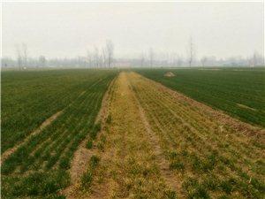 举报,老农在睢县匡城种子站买的除草剂打小麦打死了,没人管!找谁?