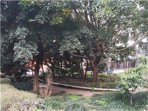 利城花园3室2厅2卫1200元/月