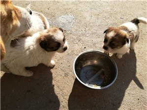 宠物狗销售