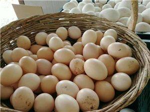 出售林下笨养鸡蛋