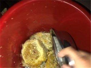 野生蜂蜜 百花蜜 纯蜂蜜160/一斤 带蜡蜂蜜如图一样 150一斤 限制儋州地区购买