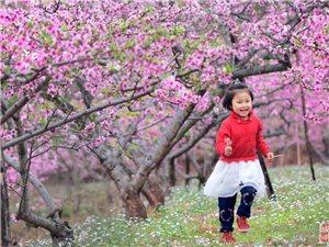 金光村的桃花真漂亮呀
