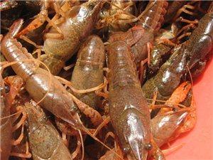 小龙虾配送
