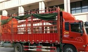 出售6米8仓栏车