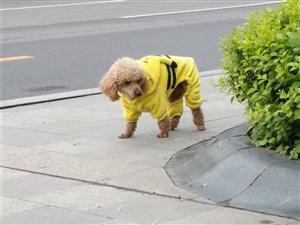 帮狗狗寻找主人