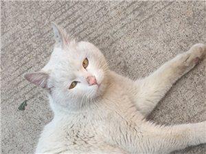 这是谁家的猫