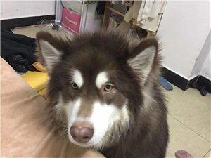 请求帮助,寻爱犬