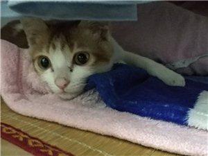 想領養一個1-2個多月大的貓咪,要求母貓