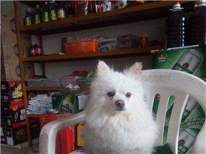我家小狗于2018年4月2日晚10时在电视塔附近失,有看到者请与我联系,电话18189381901