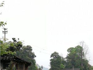�春三月,溜溜坡上�D�D�夏_