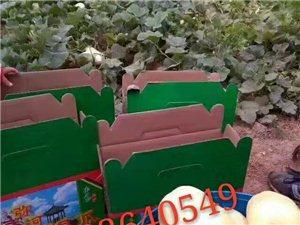 青州彌河大關營銀瓜