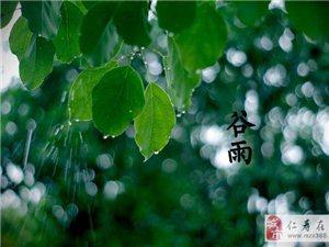 谷雨――心有希望正葱茏