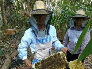 中蜂原生态百花蜜