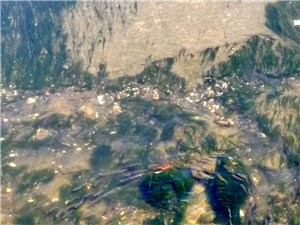 马栏河拾趣