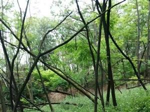 杨渠森林图片,美不胜收