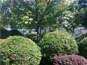 承接园林绿化绿地日常养护