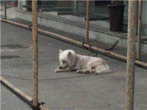 �l的狗很久啦,前面有人拿��照片����^,那�r�]看�(��f���r你留����呀),一直在�~梁汽�北站�@里,��