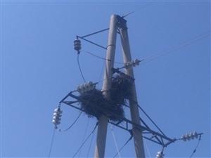 电线杆上喜鹊窝