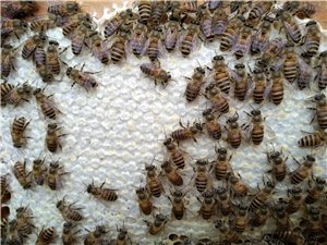 龙岭原生态农庄蜂蜜