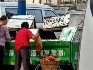 """垃圾箱里""""回收鸡"""",去处令人担忧"""