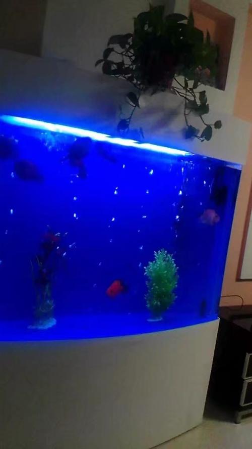 可伶可愛名牌魚缸,因上班沒時間打理現低價轉讓,買時4500元,現1200元轉讓,非誠勿擾。