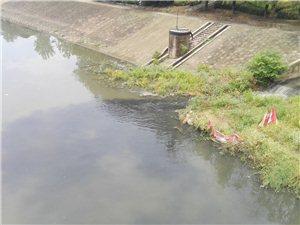 文化桥下的污染好像有点严重