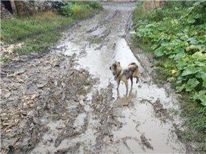 大雨天的水泥路