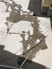 下水管道堵了没人管,卫生费缺不少缴