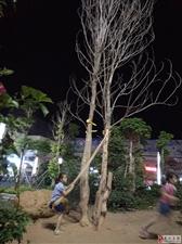 火车站广场绿化带被随意踩踏