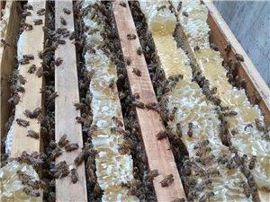 出售儋州本地蜂蜜100%純天然