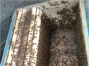 出售土蜂蜂群,蜂箱,蜂蜜