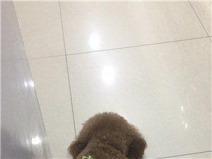 ? ?  【寻物启事】我的狗狗名叫(齐齐
