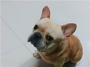 我的狗狗丢了,看到它的联系我好吗我很着急